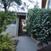 Outside-Pine